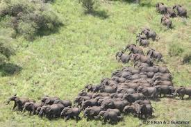 herd of elephants in south sudan
